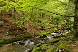 Photograph of Valserine forest and river in Haut Jura Natural Park