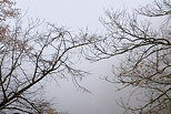 Image de branches in the mist of a winter morning