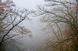 Photograph of trees in the winter fog over Barbennaz canyon