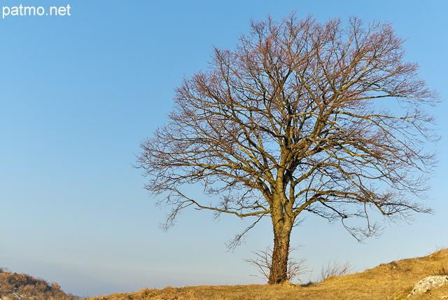arbre solitaire sur fond de ciel bleu prs de chaumont en haute savoie - Arbre Ciel