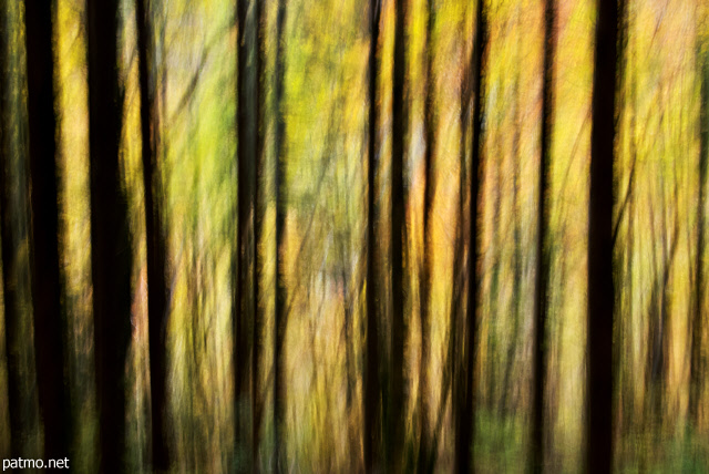 Abstract image of tree silhouettes in Valserine forest