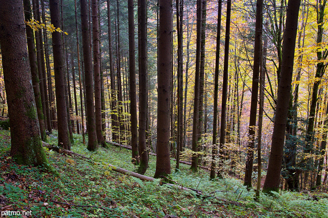 Photo of an autumn landscape in Valserine forest