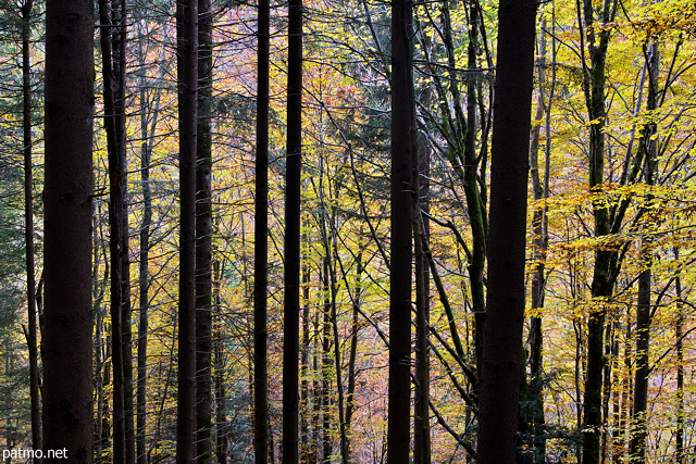 Photo of Valserine forest in the autumn light
