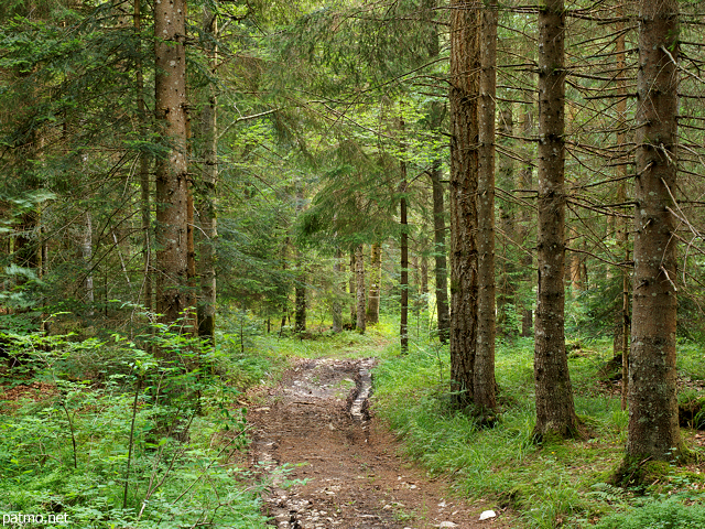 Image of a trail in Champfromier forest in Haut Jura Natural Park