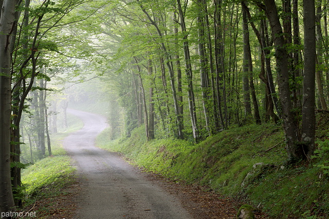 Image of a country road underwood in Arcine forest