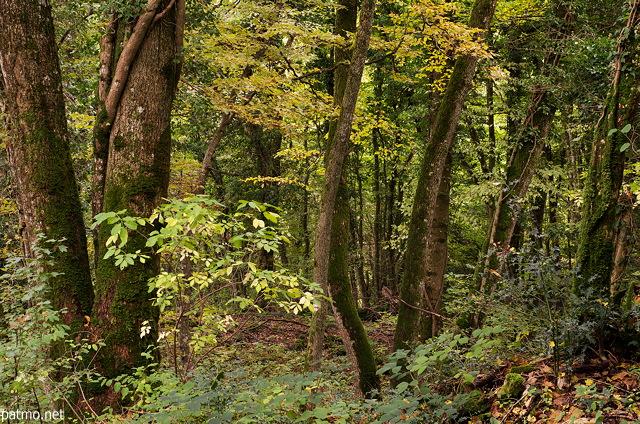Nouvelles images Couleurs d'automne en sous bois dans la for u00eat du Vuache # Fiscalité Bois Et Forêts