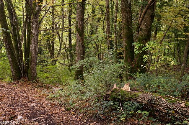 Nouvelles images sous bois d 39 automne savigny en haute - Sous bassement en bois ...