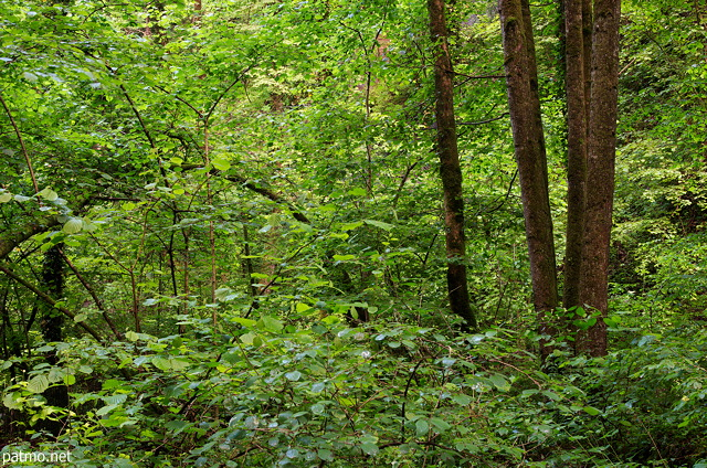 Image of lush greens in springtime forest in Frangy