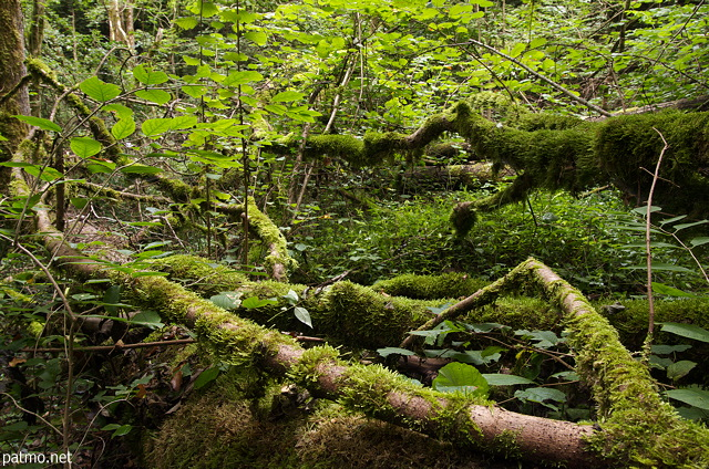 Photograph of fallen trees and moss in Chilly's forest