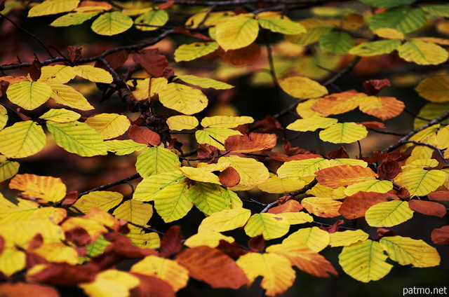 Images of autumn leaves in Minzier forest
