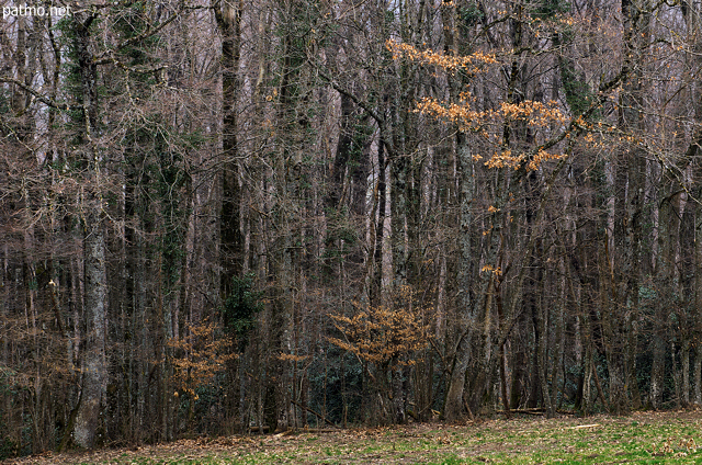 Image of a forest edge in winter near Savigny