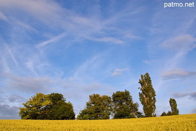 champ de bl arbres ciel bleu et nuages - Arbre Ciel