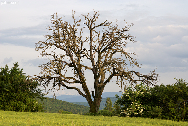 Photo of an old tree in the french countryside