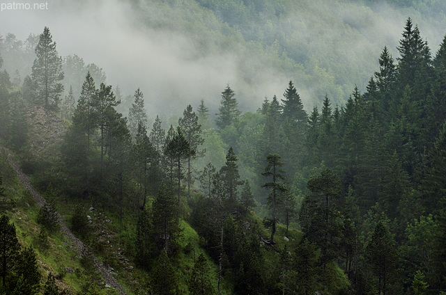 Image of a misty morning in Valserine valley