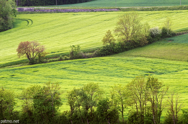 Image of a green rural nadscape in springtime