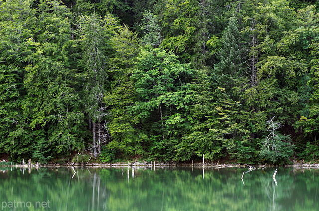 Picture of the green forest on the banks of Vallon lake
