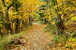 Photo of an autumn path in Provence forest