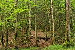 Image of the forest in french Jura around Herisson river