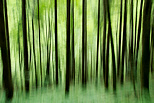 Picture of trees silhouettes in Valserine forest