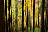 Abstract photo of autumn in Valserine forest