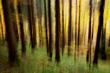 Abstract image of Valserine forest in autumn