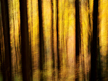 Abstract image of trees and autumn colors in Valserine forest