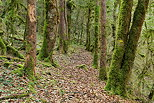 Picture of a forest path in Haut Jura Natural Park.