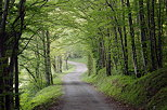 Photograph of a little road through Arcine forest