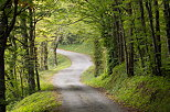 Picture of a winding road through the forest near Arcine