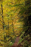 Image of a path through the autumn forest near Bellevaux