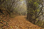 Photograph of autumn mist and colorful leaves on a little path