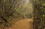 Picture of an underwood path in autumn