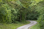 Photograph of a winding road through the french forest