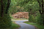 Image of logs along a forest road
