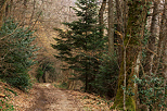 Photo of a beautiful path through Savigny's forest