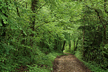 Picture of a path through the green springtime forest in Sallenoves