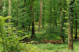 Picture with a green atmosphere in french Jura forest
