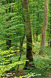 Photograph of trees in the greenery of french Jura forest