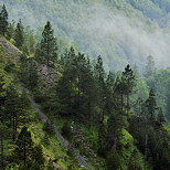 Image of mountain forest with pine trees and morning mist