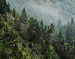 Image with summer mist and mountain forest in french Jura