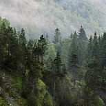 Photograph of Jura forest in the morning mist