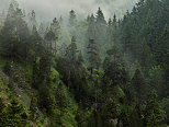 Picture of mountain forest in the morning mist