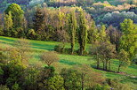 Picture of a green springtime landscape in the french countryside