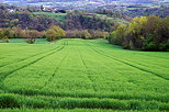Photo of a green and colorful rural landscape at the end of a springtime day