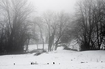 Image of a winter mood with snow and fog in the countryside around Savigny
