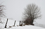 Image of a winter morning with snow and mist in the french countryside