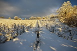 Image of the french vineyard with snow and sun