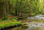 Photograph of Herisson river running through the forest in french Jura