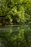 Photo of trees and reflections on river Thiou in Annecy