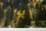 Image of the mountain forest in autumn on the banks of Vallon lake